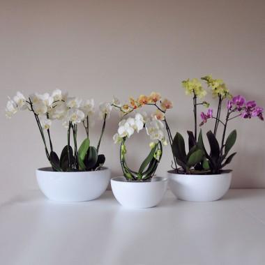 Doniczka Do Storczyków Flora 14020 White La Decora