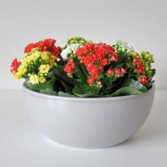 Miska ceramiczna Flora 140/20 stone