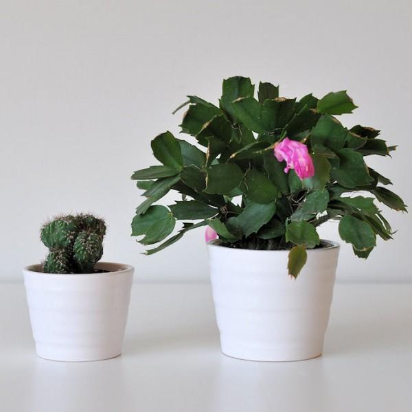 Doniczki Do Kaktusów Kopenhagen 11310cm2202 Różany Krem